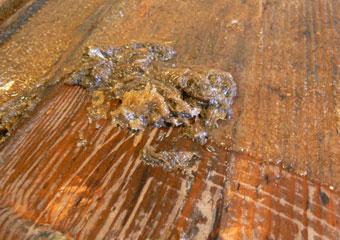 Portone in noce 1600, Particolare della grossa quantità di materiale da rimuovere in fase di pulitura.